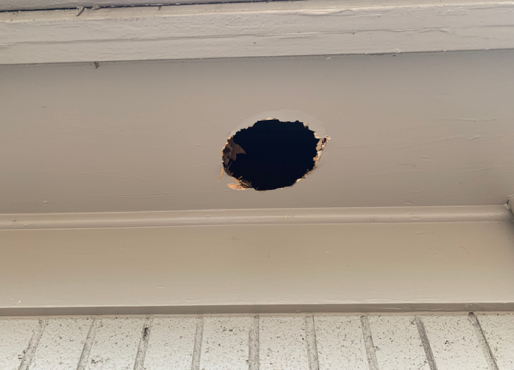 Hole in roof overhang made by raccoon.